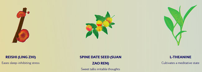 Remrise Reishi Spine Date Seed and L-Theanine